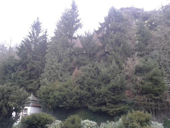 Monschau background