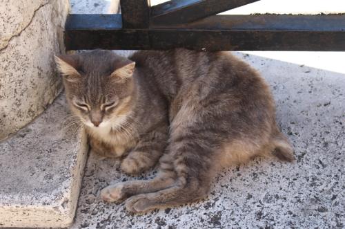 Cat charity